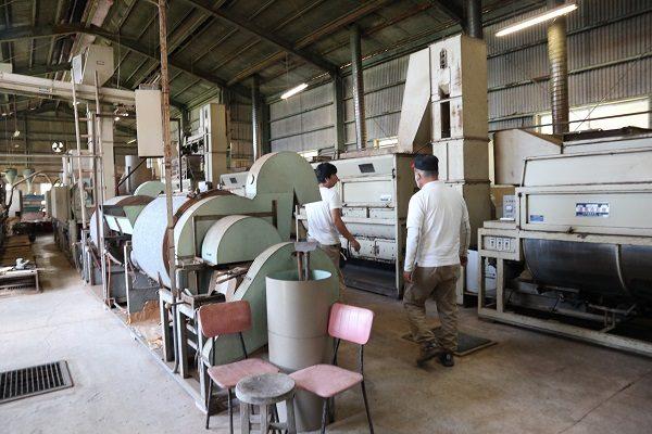 あまたま農園 水俣和紅茶 自然栽培 有機JAS